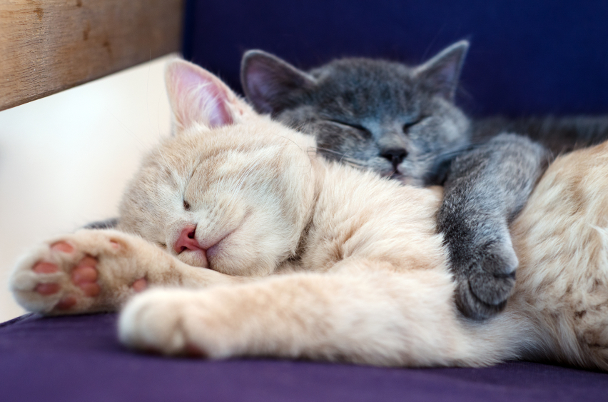 cats sleeping together iStock_000023295727_Small